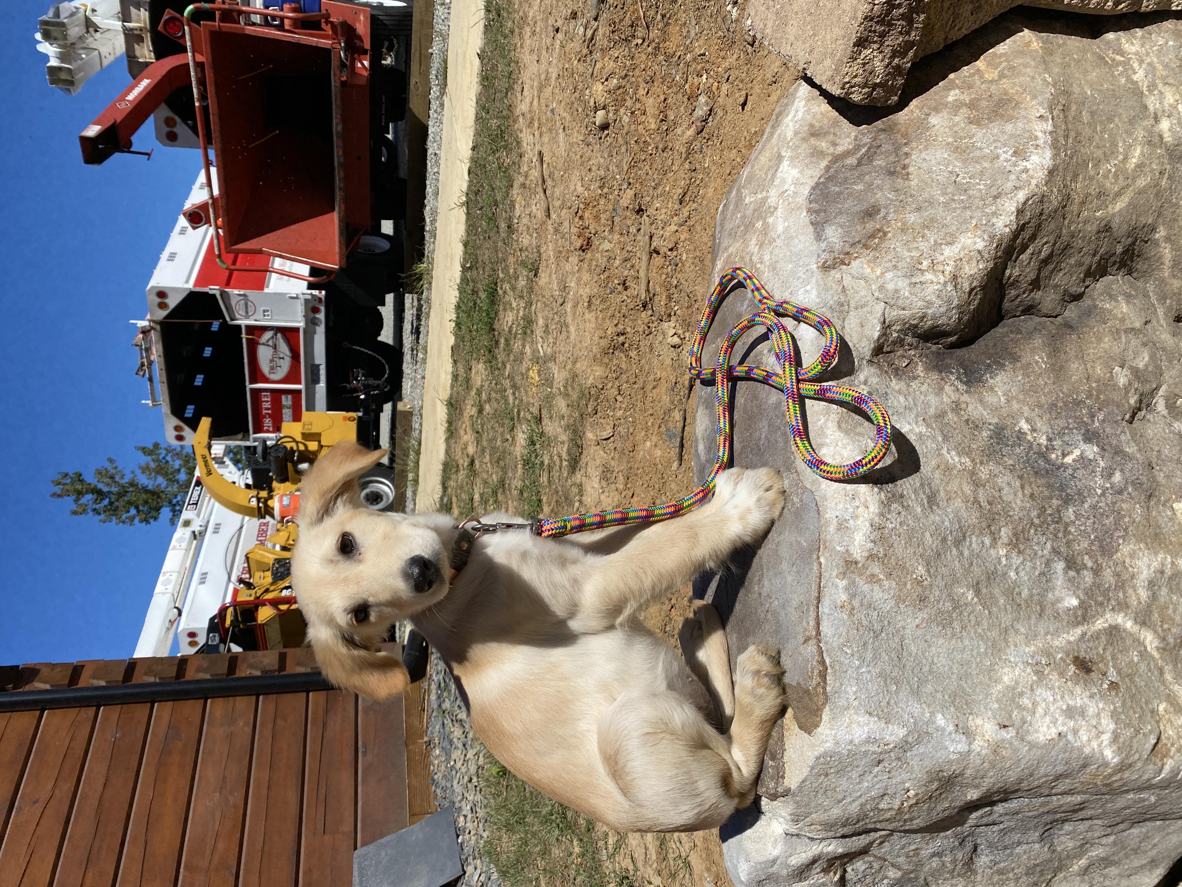 Prism Rope Dog Leash