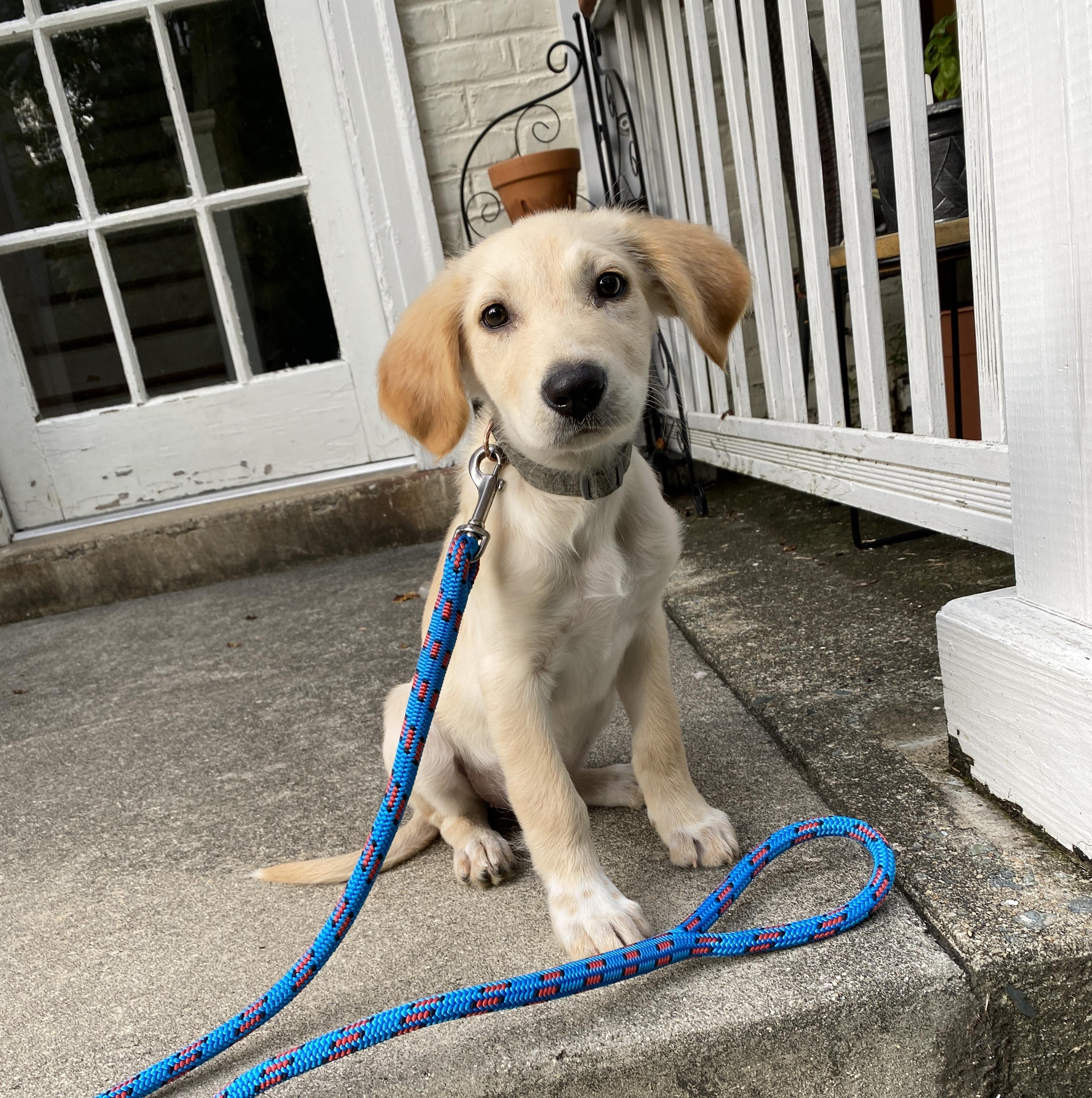 Blue Moon Rope Dog Leash